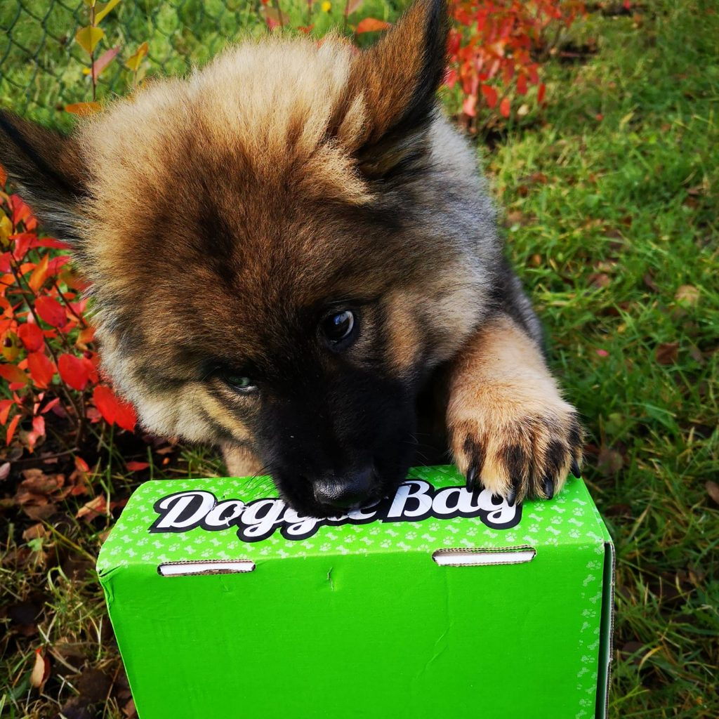 Levi med sin DoggieBag