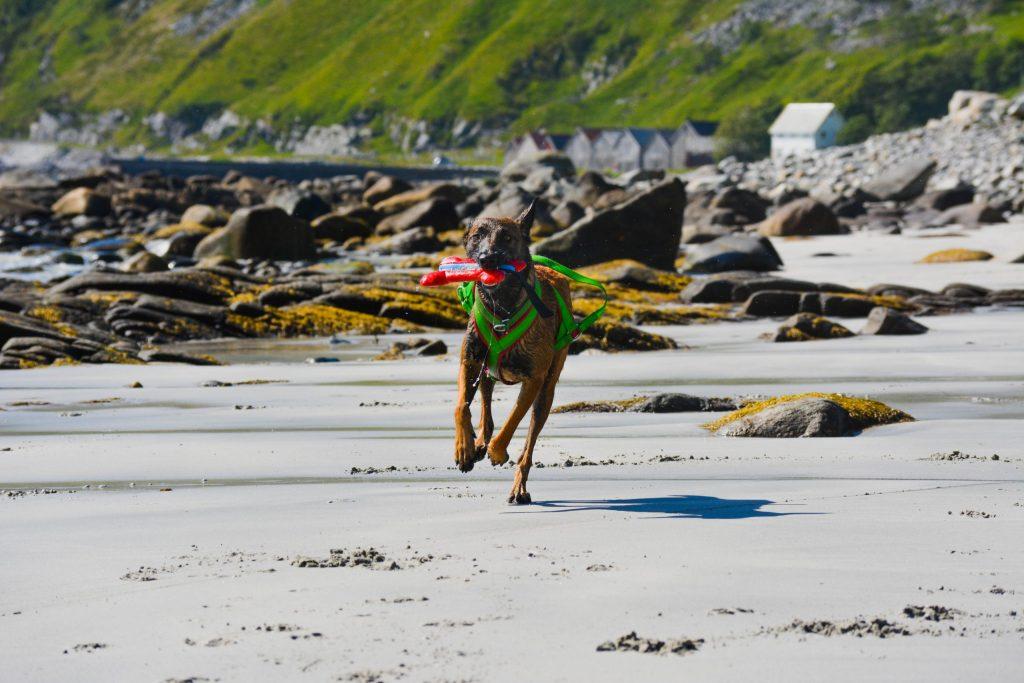 Lamia løper på stranden