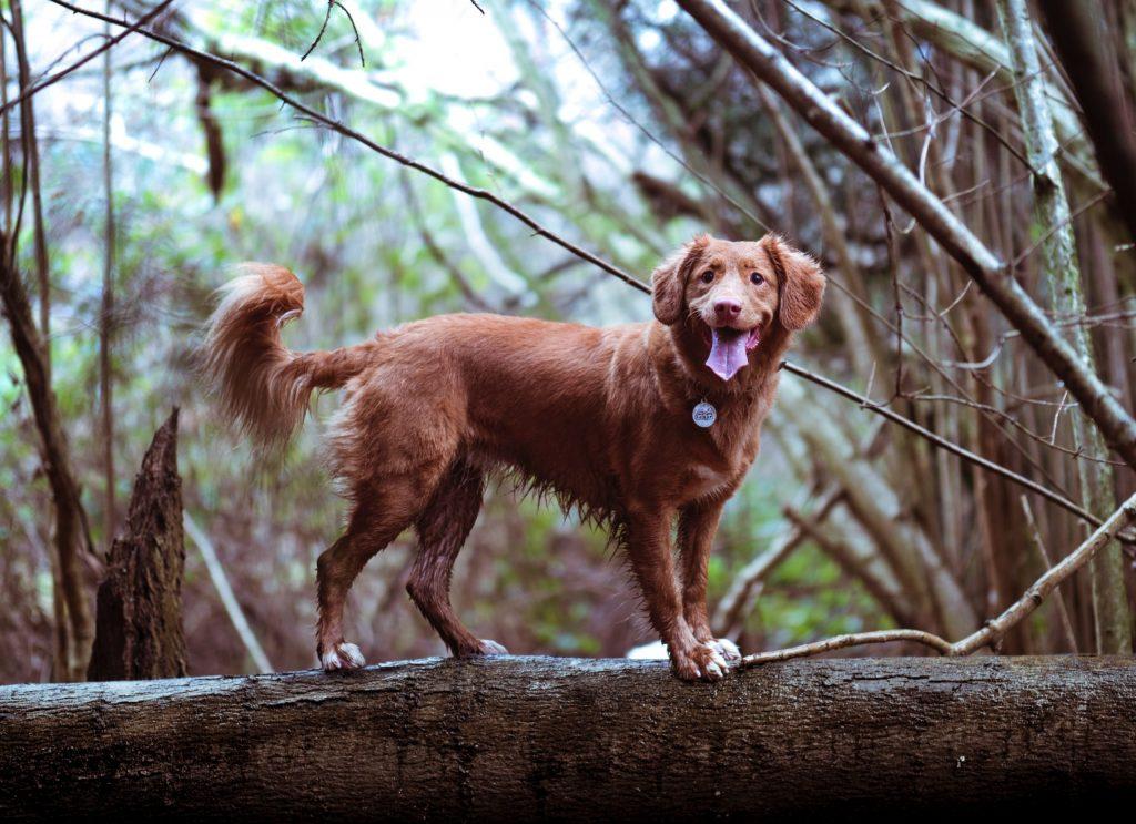 Forebygg leddskader på hunden din med variert mosjon