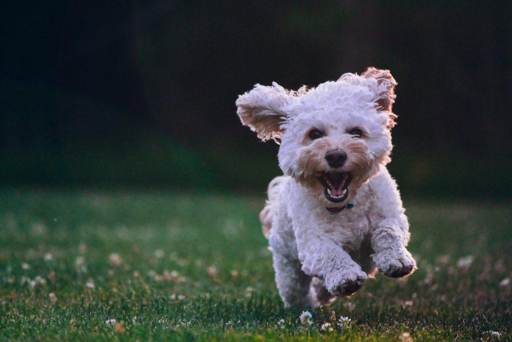 Forebygg leddskader og øk livskvaliteten til hunden din med variert mosjon