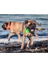 Orbiloc Dog Dual Lykt Turkis 3