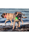 Orbiloc Dog Dual Lykt Rosa 3