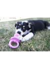 KONG Puppy Binkie, Rosa 2