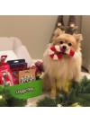 DoggieBag Julegave til Småhunder