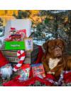 DoggieBag Julegave til Store Hunder